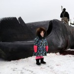Alaska Whale Photo Gallery